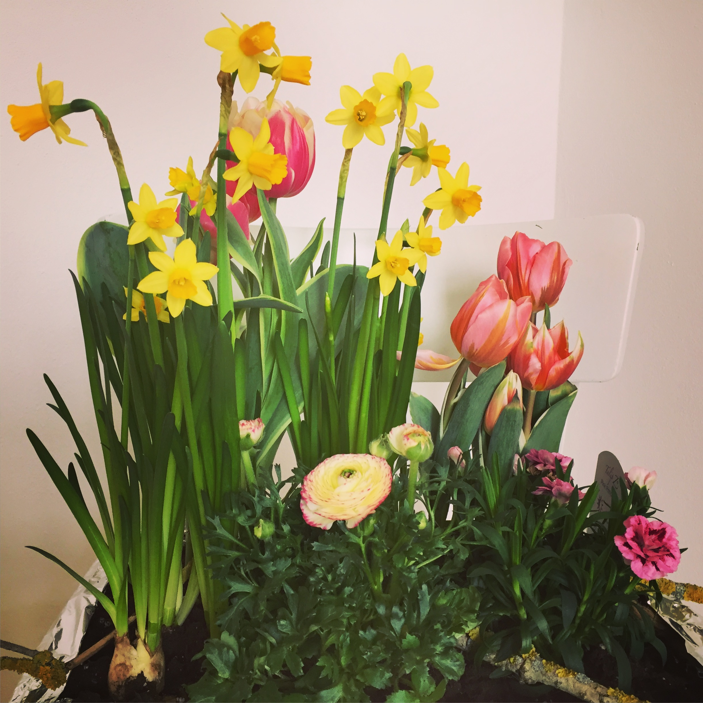 #05/18 … ich sehne mir den Frühling herbei!
